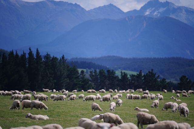 sheep-1766722_640